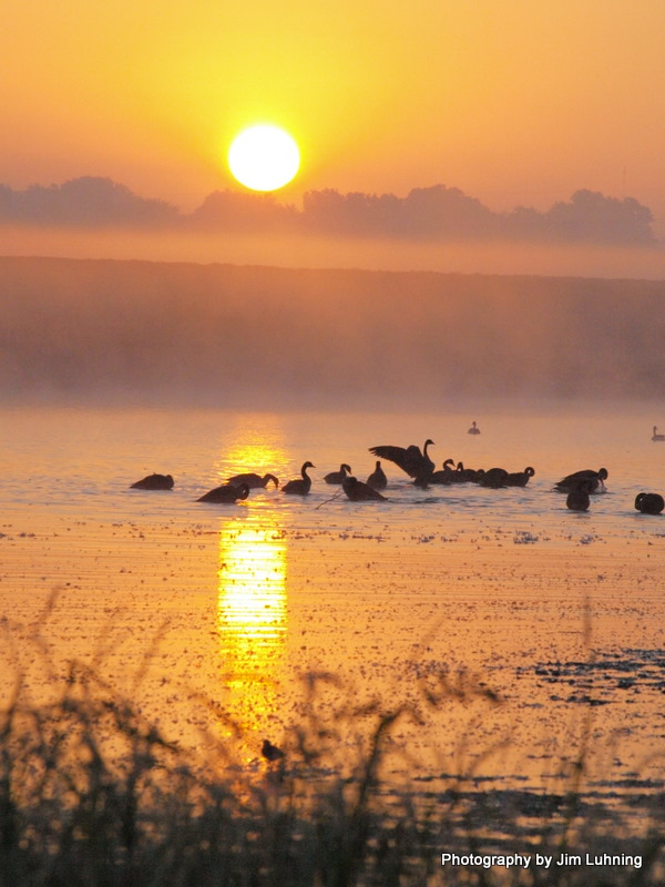© Jim Luhning - Canada Geese @ Sunrise