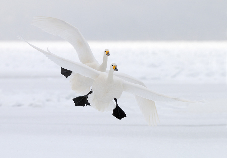 © Harry Eggens - Duo Landing