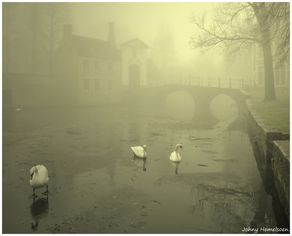 © johny hemelsoen - Foggy morning.
