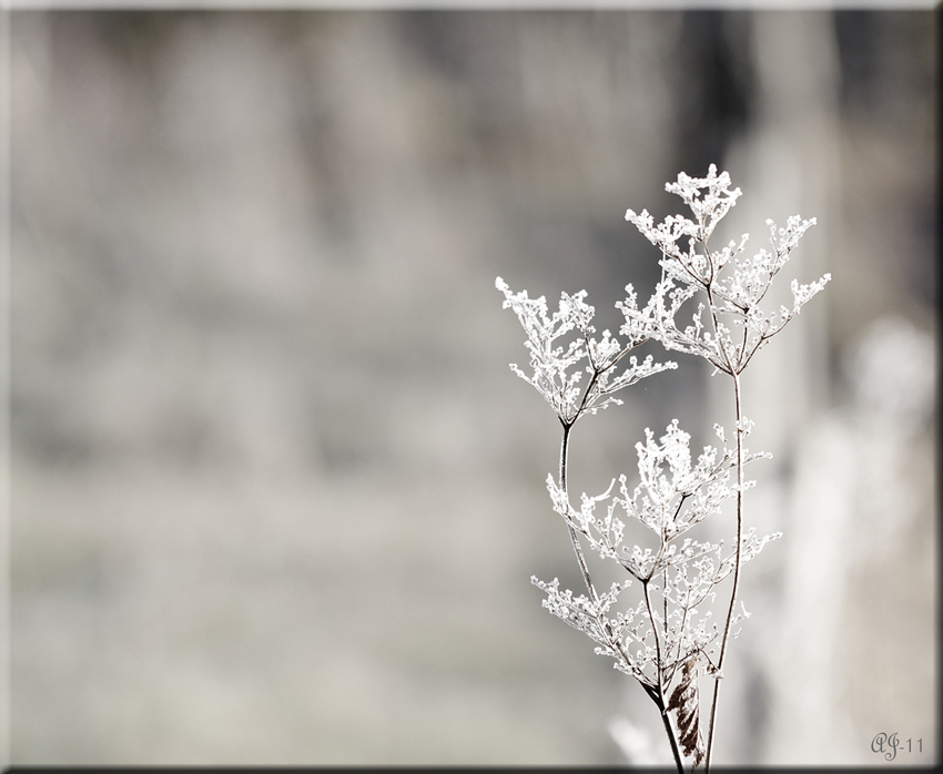 © Aina Jerstad - White Frost