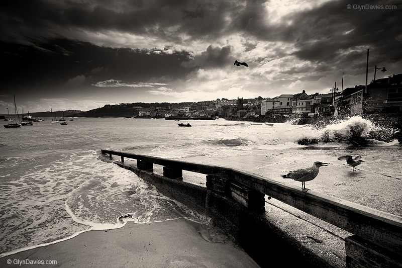 © Glyn Davies - Young Birds in St Ives